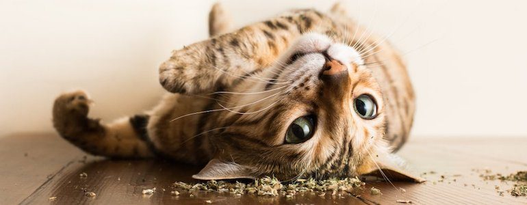 """Photographer Takes Pictures of Cats """"High"""" on Catnip"""